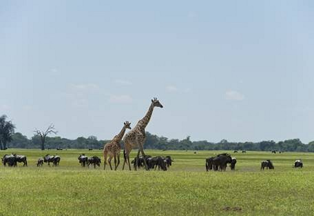 sunsafaris-8-hwange-national-park-zimbabwe.jpg