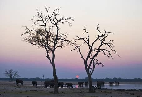sunsafaris-9-hwange-national-park-zimbabwe.jpg