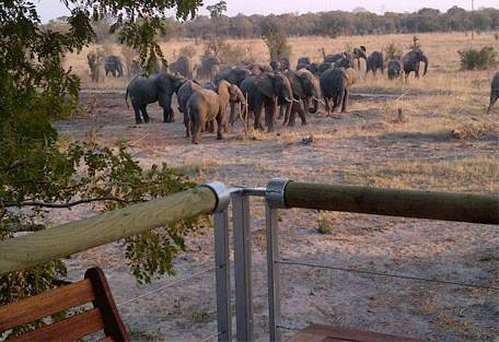 sunsafaris-12-elephants-eye.jpeg