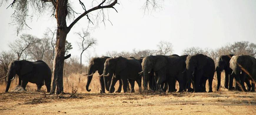 sunsafaris-3-elephants-eye.jpeg