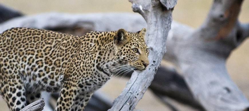sunsafaris-3-hwange-national-park.jpg