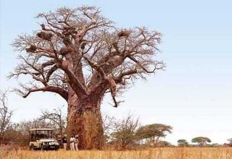 sunsafaris-6-singita-pamushana.jpg