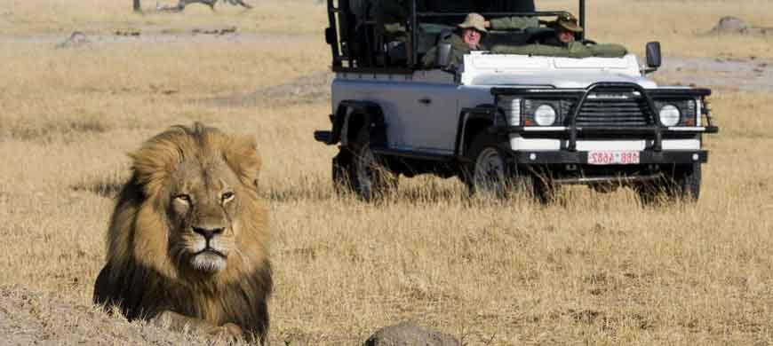 1-zimbabwe-lion-drive.jpg