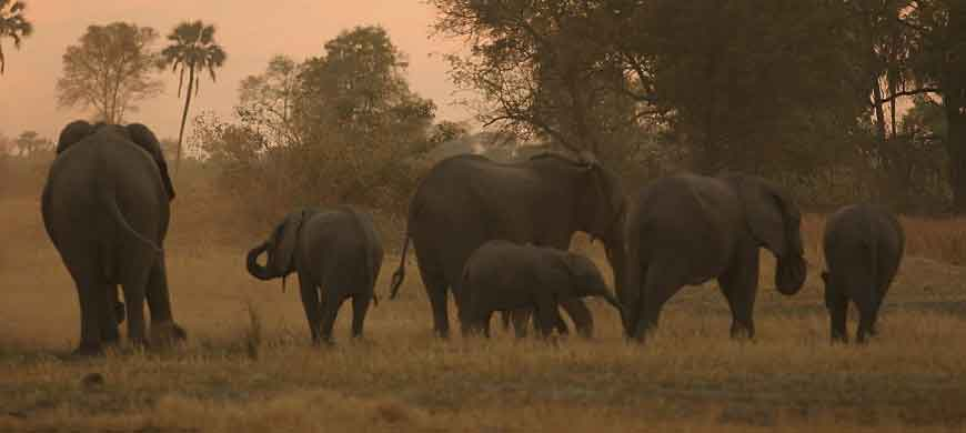 elephants-sunset-okavango.jpg