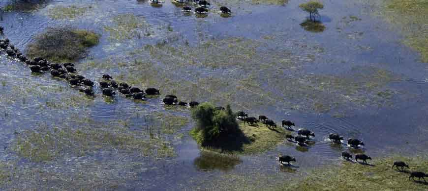 botswana-aerial-buffalo3.jpg