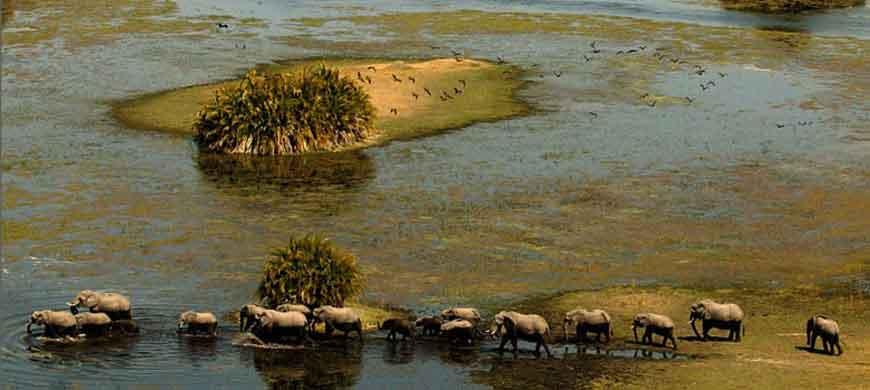 870_okavango_elephants.jpg