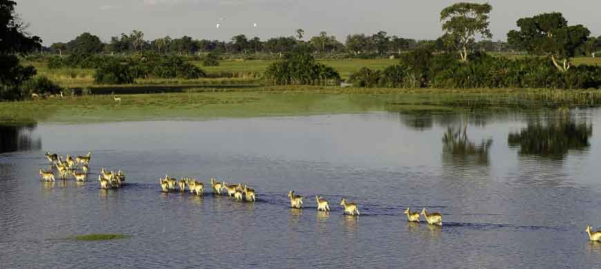 botswana-aerial6-wilderness.jpg
