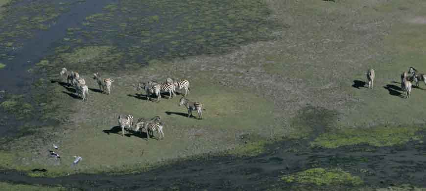 zebra-linyanti.jpg