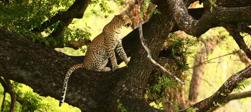 xakannaxa-leopard.jpg