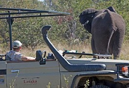 456-1-elephant_crossing_moremi.jpg