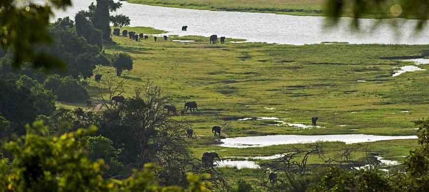 870_okavangochobe_elephants.jpg