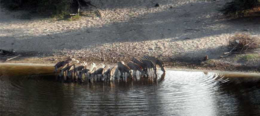 870_nxaipan_zebras.jpg