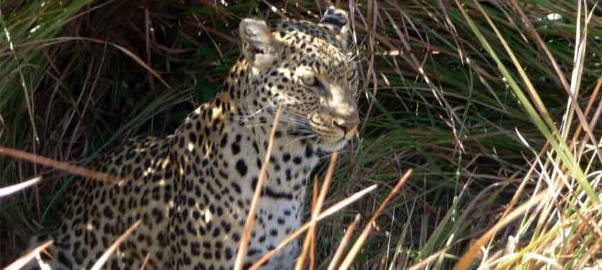 870_trekandpaddle_leopard.jpg