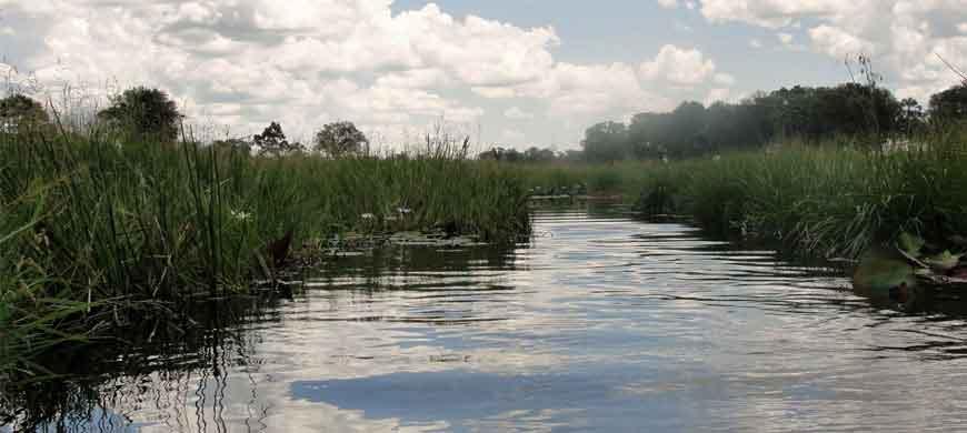 870_wildbotswana_wetland.jpg
