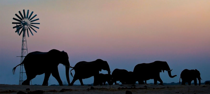870_hwange_elephants.jpg