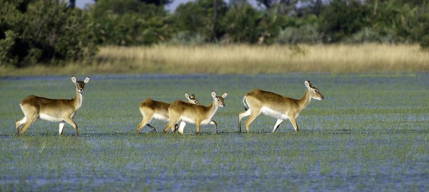 botswana-wildlife.jpg