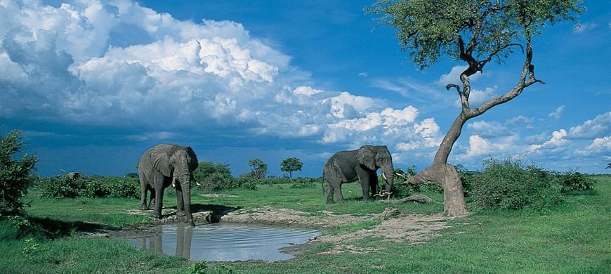 3-savute-safari-lodge.jpg