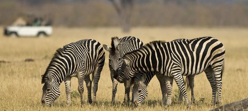 3-zimbabwe-zebra-drive.jpg