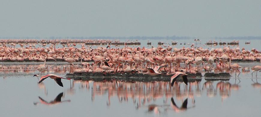 flamingos-makgadikgadipans.jpg