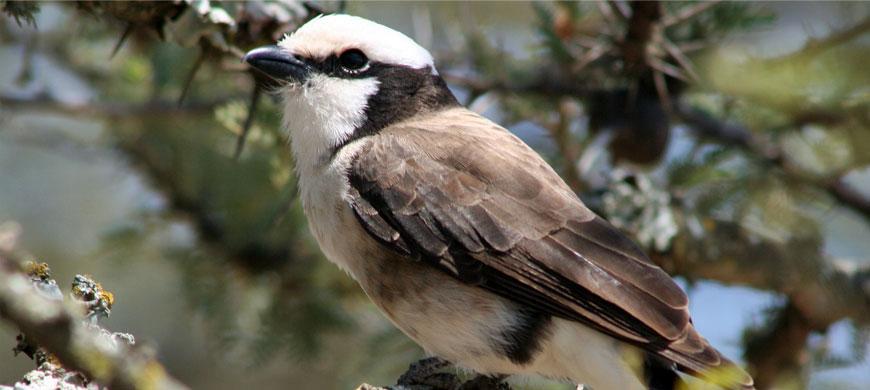 870_olpejeta_birdlife.jpg