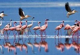 456-1-navisha-flamingo.jpg