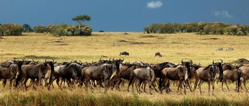 wide-masai-migration.jpg