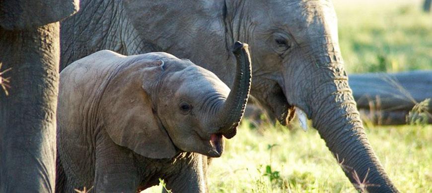 elephant_baby.jpg