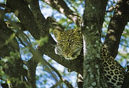 big-5-luxury-kruger-romance-1-sun-safaris.jpg