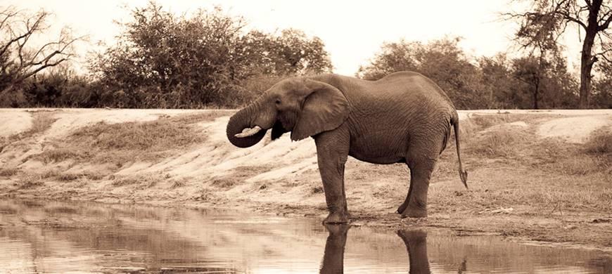 big-5-luxury-kruger-romance-2-sun-safaris.jpg