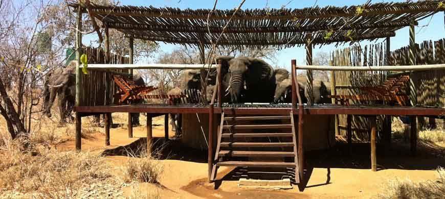 klaserie-elephants-pool.jpg