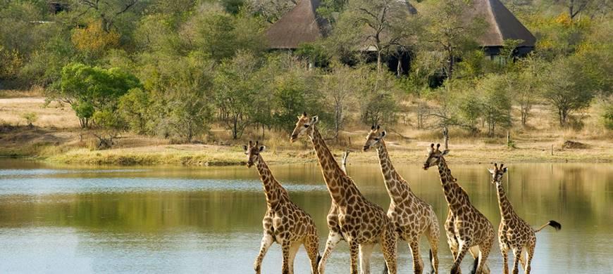 kruger-express-premier-chitwa-chitwa2-sun-safaris.jpg