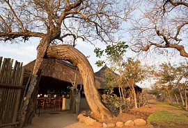 kruger-walking-safari-1-sun-safaris.jpg