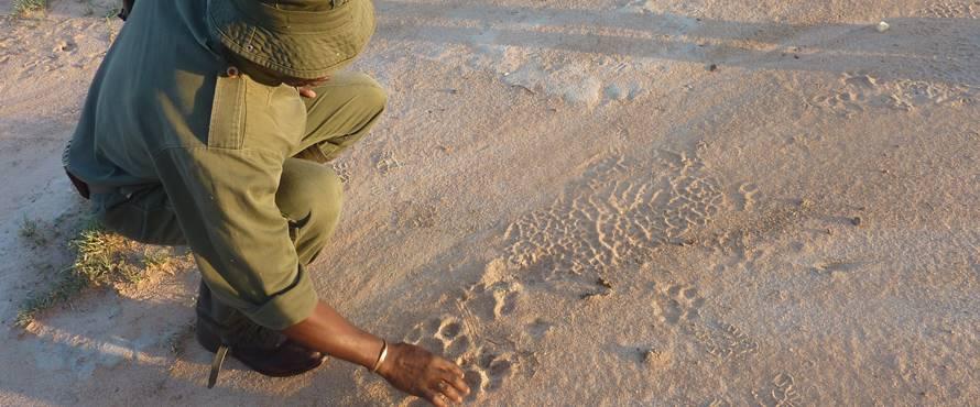 kruger-walking-safari-3-sun-safaris.jpg