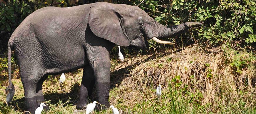 870_majete_elephant.jpg