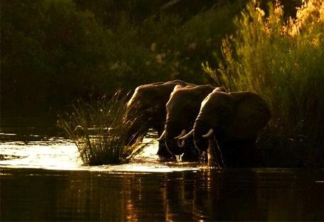 456_lugenda_elephants.jpg