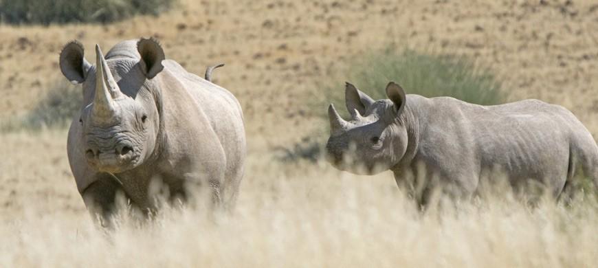rhino-wilderness.jpg