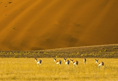 springbok-wilderness.jpg