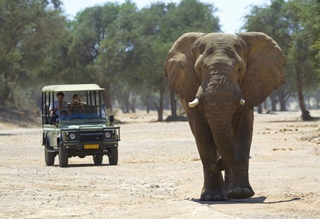 elephant-drive4-wilderness.jpg