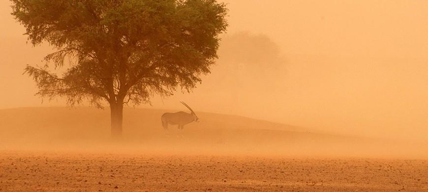 gemsbok-dust.jpg