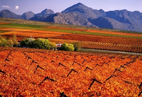 autumn_winelands.jpg