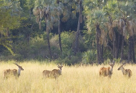 south-africa-general-eland.jpg