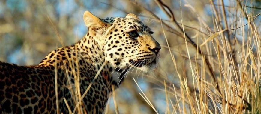 tanzania-leopard.jpg