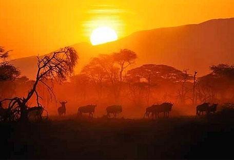 wildebeeest-migrat_.jpg