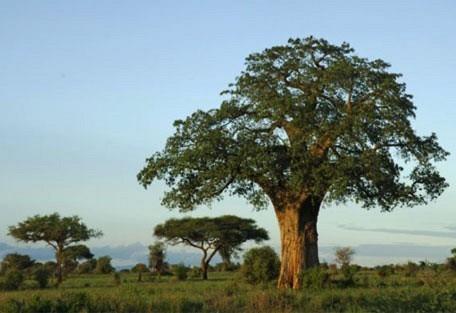 x02-view-of-a-hugh-tree.jpg