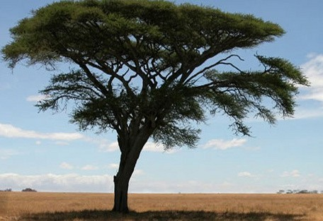 Serengetipark.jpg