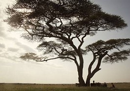 sunsafaris-1-serengeti-migration-safari.jpg