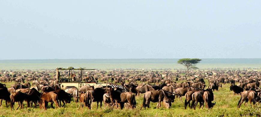 sunsafaris-3-serengeti-migration-safari.jpg