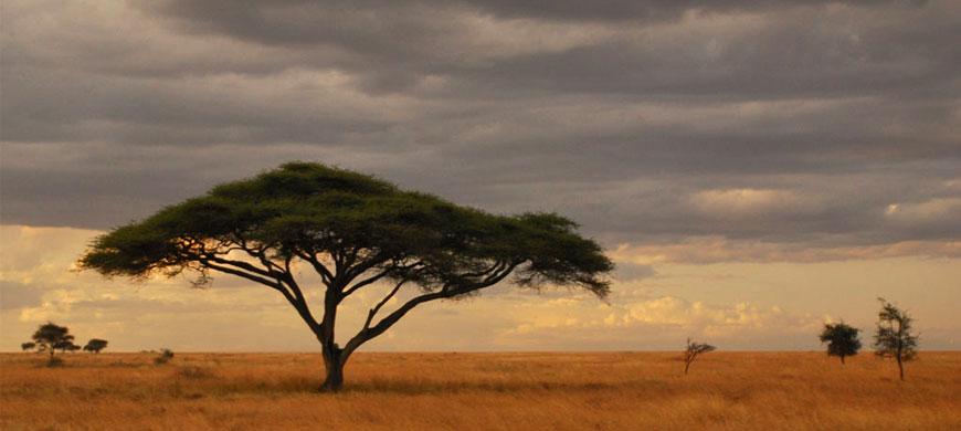 ser-classic-serengeti-tree.jpg