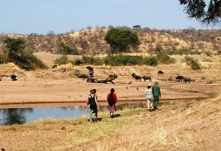 walking_safari.jpg