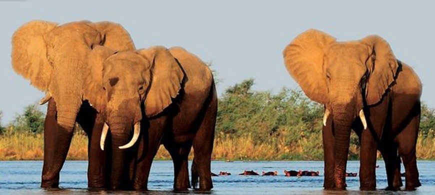 elephants-chiawa.jpg
